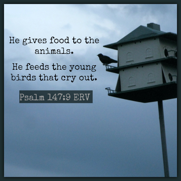 FeedsTheYoungBirds